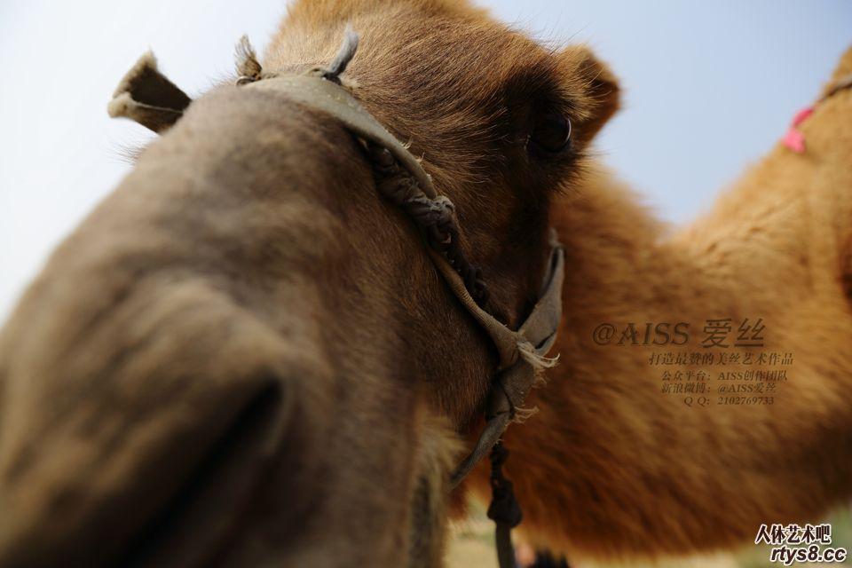 肉丝靓妹与骆驼
